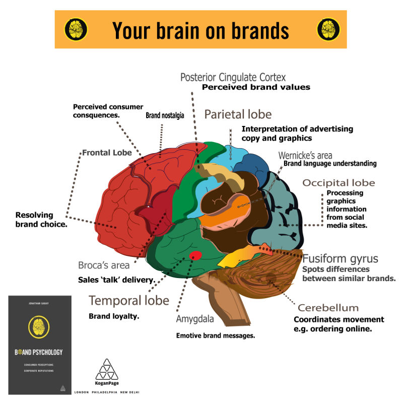 3d-plain-brain-on-brands-infographic.png